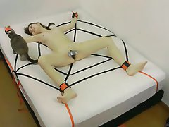 Amateur, Bondage, Webcam